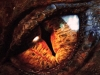 L'occhio del drago